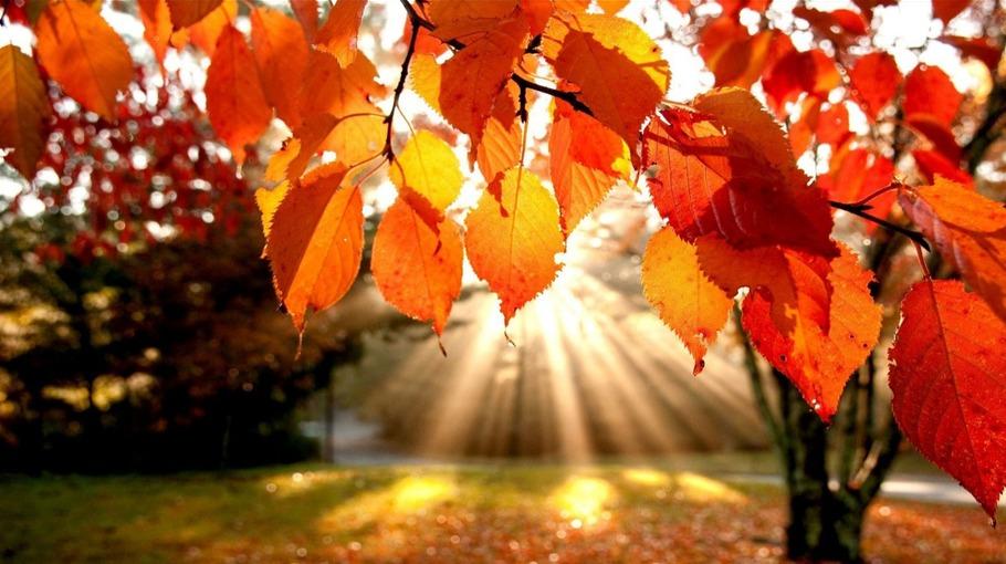 Россиян ждет аномально теплый конец октября