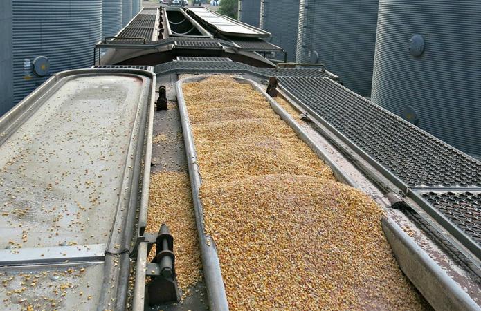 На Дону объемы отгруженного зерна выросли