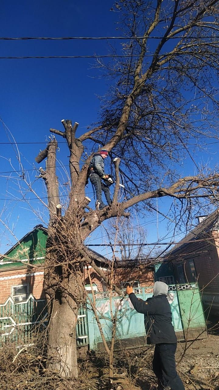 В Егорлыкской спилили аварийно опасные деревья