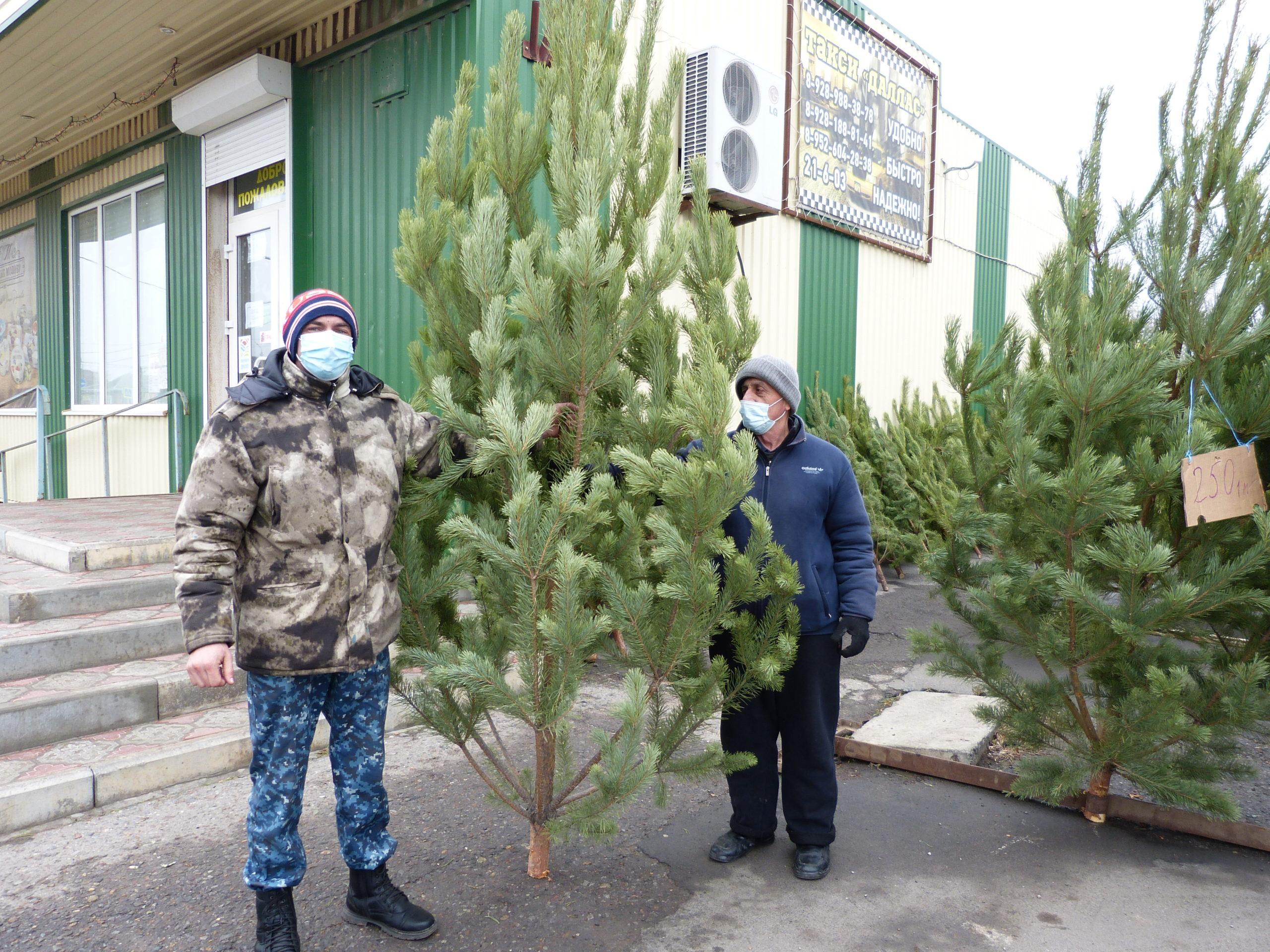 В Егорлыкской елочные базары