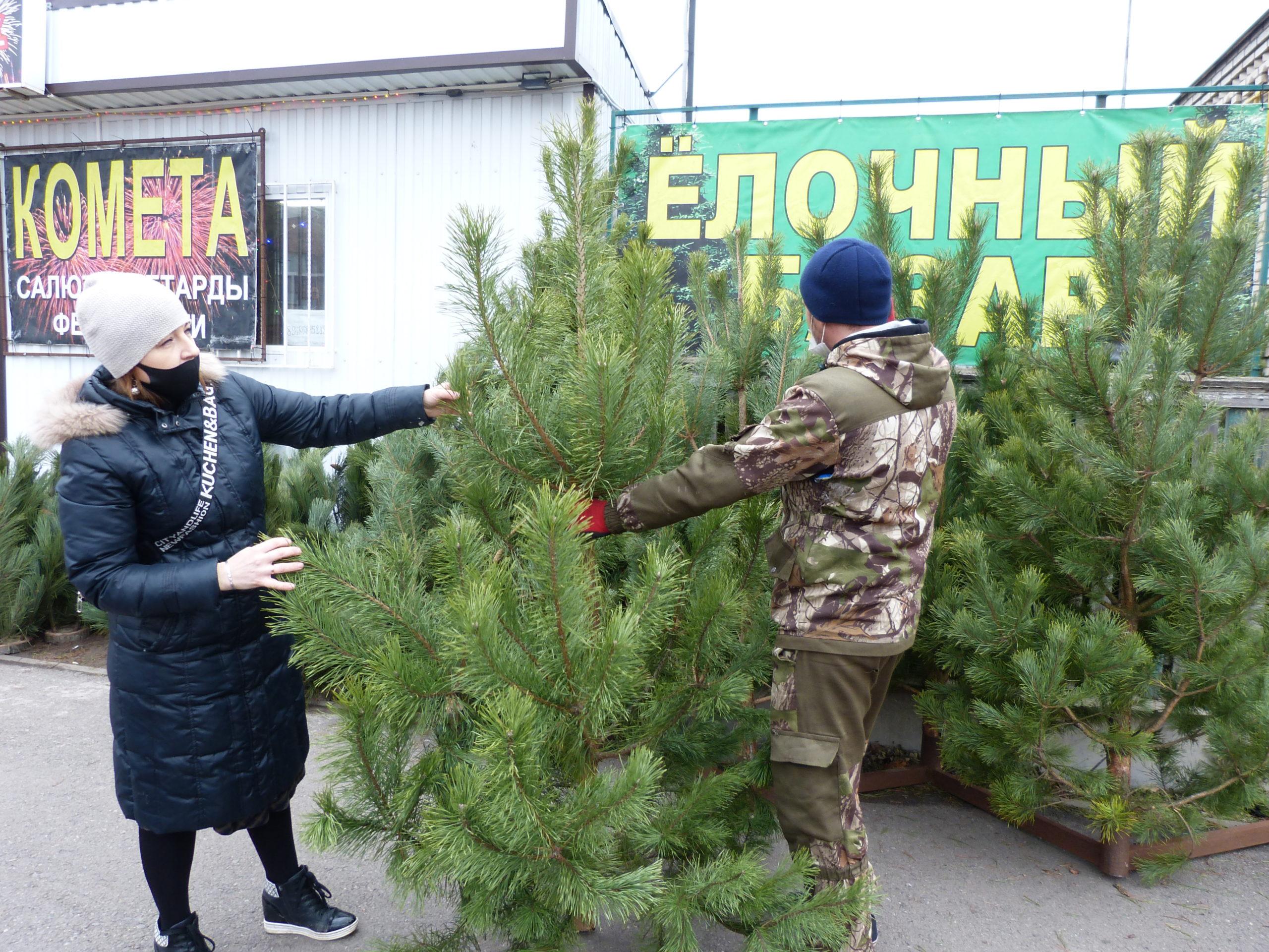 Елочные базары открылись в Егорлыкской