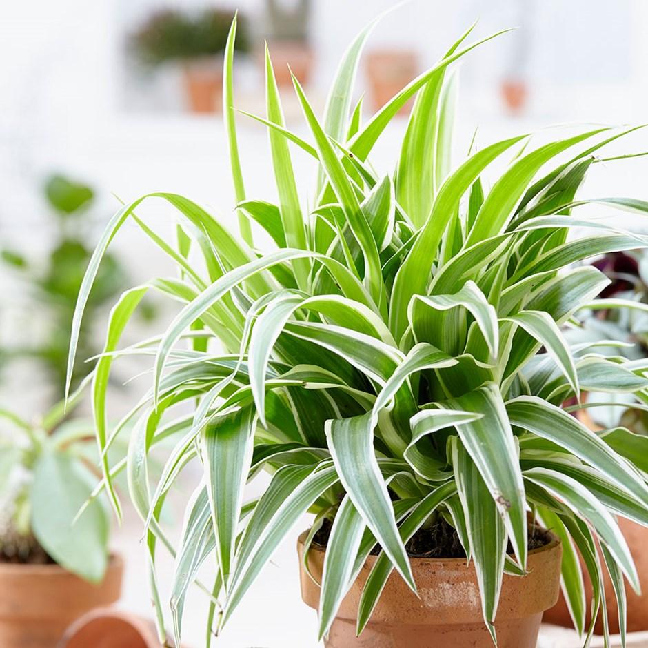 Советы для егорлычан о том, как ухаживать за комнатными растениями зимой