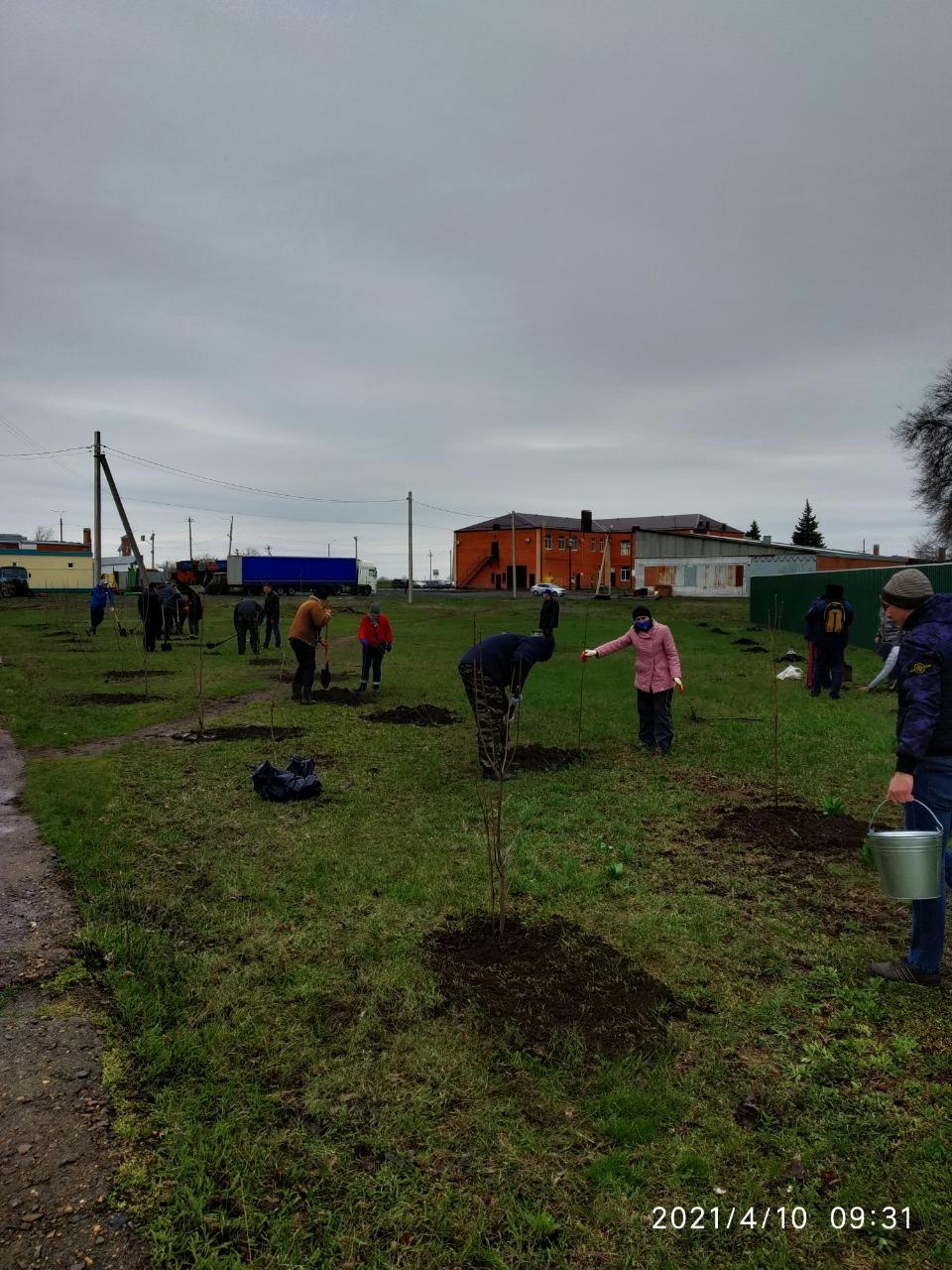 182 новых дерева в Егорлыкском районе