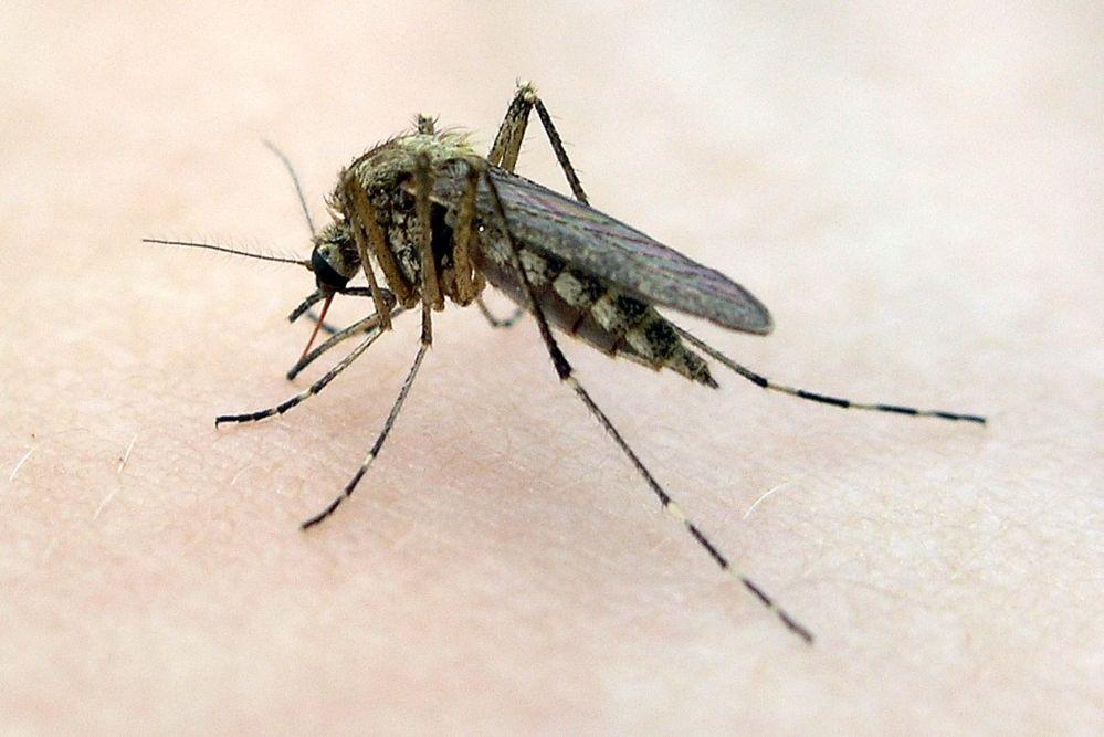 Как комары выбирают свою жертву