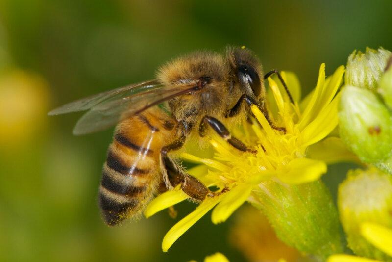Из Ростовской области на Украину не выпустили мужчину с пчелами